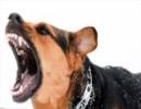 حمله سگ های وحشی در ورزشگاه آزادی/اوضاع مجروحین وخیم است