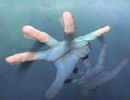 غرق شدن دو مرد در استخر پرورش ماهی