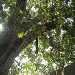 جوان ۲۴ ساله خودش را از درخت گردو حلق آویز کرد +عکس
