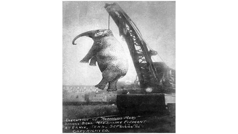 عکسی عجیب و دردناک از فیلی که به جرم قتل اعدام شد!