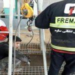 جسد کارگر گرفتار در سیلو بیرون آورده شد