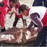 قتل هولناک دو برادر در شهرستان داراب!