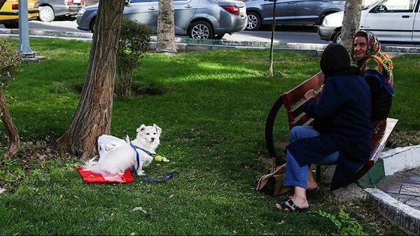 سگ گردانی در تهران