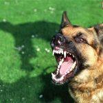 حمله ی سگ های وحشی ولگرد به کودک خلخالی
