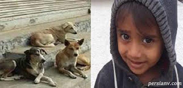واکنش فرماندار قشم به جان باختن کودک سه ساله در ماجرای هولناک