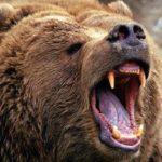 ماجرای خاص حمله خرس به چوپان ناشنوا
