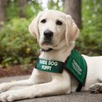 عجیب ترین مراسم خاکسپاری سگ در رشت