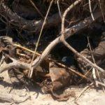 کشف جسد در رودخانه ، نگاه ها را به سمت دوست پسر مهربان کشید