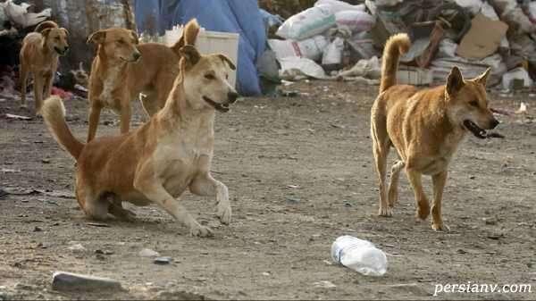 دار زدن سگ
