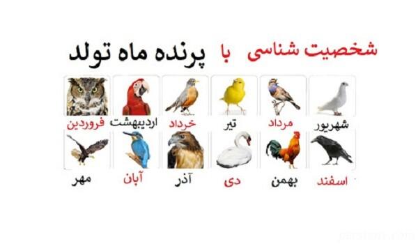روش شخصیت شناسی با پرنده ماه تولد