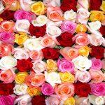 معانی رنگ گلها ، تعداد شاخه های گل !