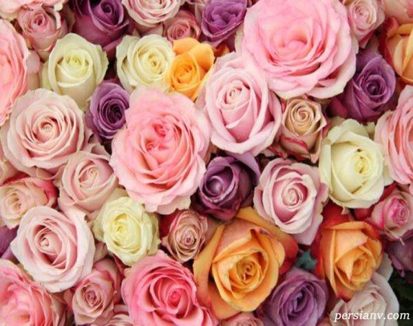 معانی رنگ گلها