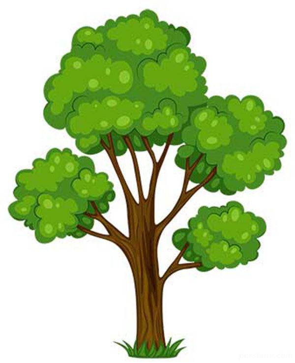 درخت متولد هر ماه