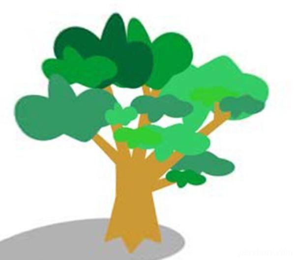 درخت متولد هر ماه و فال آن