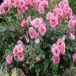 فال و شخصیت شناسی از روی گل ماه تولد
