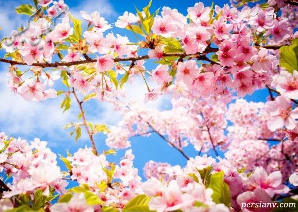 فال و طالع بینی متولدین فصل بهار