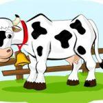 بازی جالب و پرهیجان ، محلی گاو گوساله