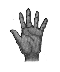 طالع بینی انواع شکل کف دست