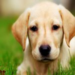 طالع بینی متولدین سال سگ (۱۳۹۷)