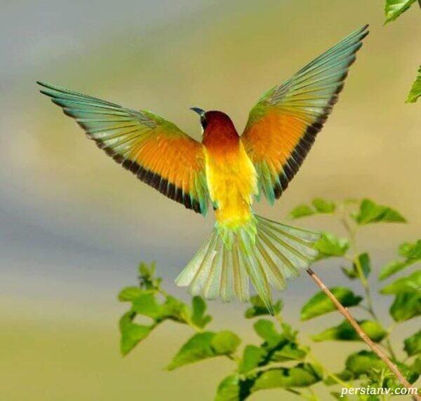 شخصیت شناسی با پرندگان