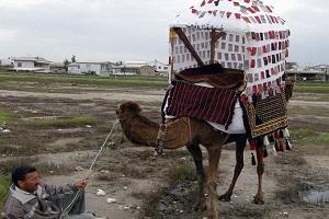 کجاوه بافی چیست و کاربرد کجاوه ترکمن