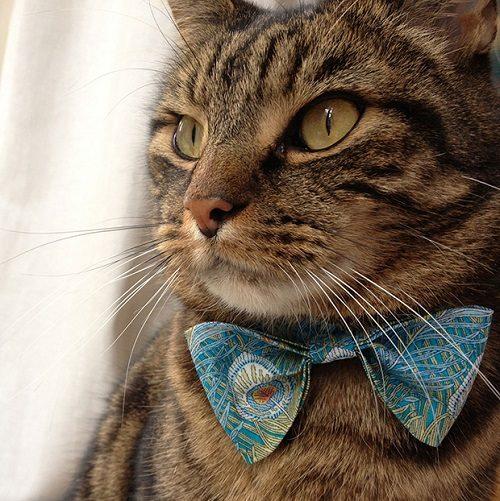 نحوه درست کردن گردنبند برای گربه با پارچه +تصاویر