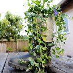 با سیمان گلدان چکمه ای شیک و مقاوم بسازید
