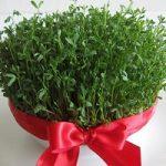 آموزش کاشت سبزه هفت سین عید با بذرهای مختلف