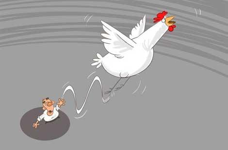 کاریکاتور های جالب ، انقراض مرغ