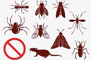 مبارزه باحشرات موذی درمنزل