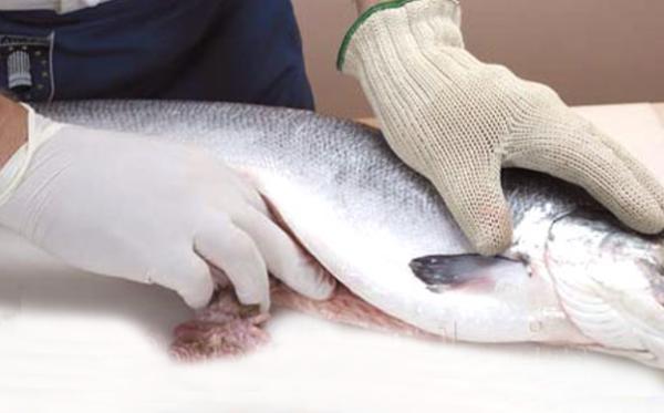 پاک کردن پولک ماهی
