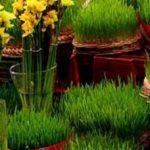 برای اینکه سبزه زود زرد نشه چکار باید کرد؟