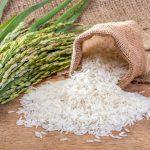تهیه برنج کته ای