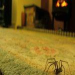 تمیز کردن تار عنکبوت