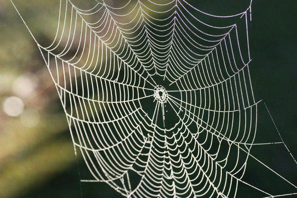 از بین بردن تار عنکبوت