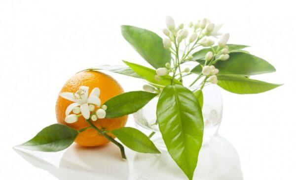 طرز تهیه عرق بهار نارنج