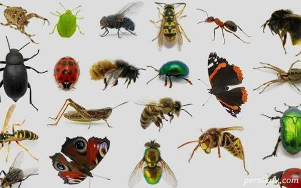 چگونه با حشرات خانه مبارزه کنیم