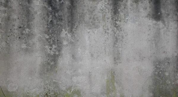 پاک کردن لکه های سیاه از روی دیوار گچی