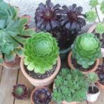مراقبت از گل ها و گیاهان خانگی