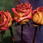 روش تمیز کردن گل مصنوعی و گل خشک
