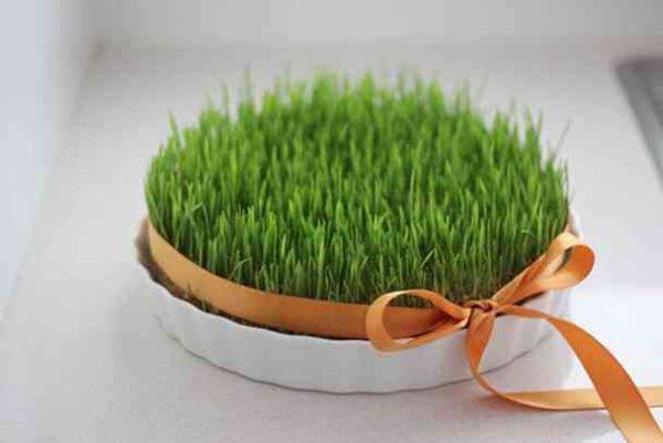 طرز تهیه انواع سبزه