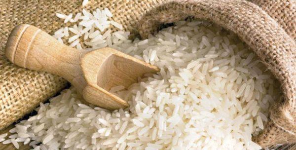 شپشک برنج