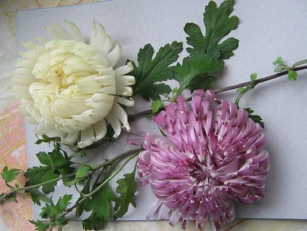 تزئین پیاز به شکل گل داوودی