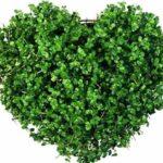 آموزش کاشت سبزه قالبی