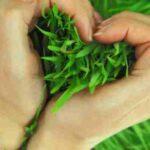 آموزش کاشت سبزه به شکل رحل قرآن