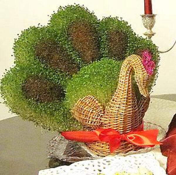 کاشت سبزه طاووس