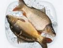 نگران گیر کردن تیغ ماهی نباشید !