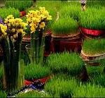 چطور سبزه هفت سین را آماده کنیم