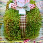 آموزش کاشت سبزه عید به شکل جعبه هدیه +تصاویر