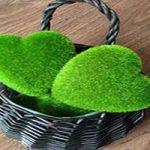 آموزش کاشت سبزه عید نوروز +تصاویر
